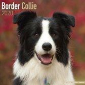 Border Collie Calendar 2020