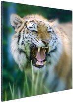 FotoCadeau.nl - Woeste tijger Aluminium 60x90 cm - Foto print op Aluminium (metaal wanddecoratie)