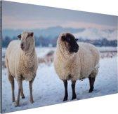 Twee schapen in de sneeuw Aluminium 120x80 cm - Foto print op Aluminium (metaal wanddecoratie)