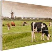 Grazende koeien op een dijk Hout 80x60 cm - Foto print op Hout (Wanddecoratie)