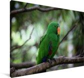 Edelpapegaai zit op een takje Canvas 140x90 cm - Foto print op Canvas schilderij (Wanddecoratie woonkamer / slaapkamer)