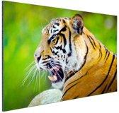 FotoCadeau.nl - Brullende tijger Aluminium 120x80 cm - Foto print op Aluminium (metaal wanddecoratie)