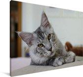 Een liggende Grijze Maine Coon kat Canvas 140x90 cm - Foto print op Canvas schilderij (Wanddecoratie woonkamer / slaapkamer) / Huisdieren Canvas Schilderijen