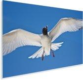 Een Zwaluwstaartmeeuw in de blauwe lucht Plexiglas 90x60 cm - Foto print op Glas (Plexiglas wanddecoratie)