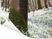 Een veld vol met sneeuwklokjes Tuinposter 80x60 cm - Tuindoek / Buitencanvas / Schilderijen voor buiten (tuin decoratie)