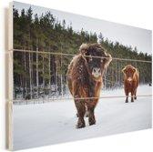 Twee Schotse hooglander kalfjes Vurenhout met planken 30x20 cm - klein - Foto print op Hout (Wanddecoratie)