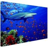 Haai bij koraalrif Canvas 180x120 cm - Foto print op Canvas schilderij (Wanddecoratie woonkamer / slaapkamer) / Dieren Canvas Schilderijen XXL / Groot formaat!