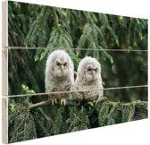 Twee uilskuikens Hout 60x40 cm - Foto print op Hout (Wanddecoratie)