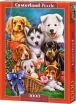 Puppies - 1000 stukjes