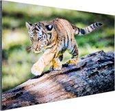 Jong tijgertje loopt op boomstam Aluminium 30x20 cm - Foto print op Aluminium (metaal wanddecoratie)