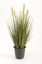 Gras plant Groen (12|doos)