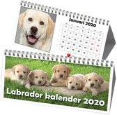 Labrador Retriever Driehoek Bureaukalender 2020
