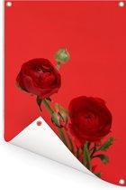 Rode boterbloemen op een rode achtergrond Tuinposter 60x90 cm - Tuindoek / Buitencanvas / Schilderijen voor buiten (tuin decoratie)