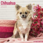 Chihuahua Calendar 2020