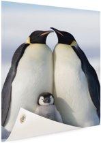 Pinguingezin  Tuinposter 80x120 cm - Tuindoek / Buitencanvas / Schilderijen voor buiten (tuin decoratie)