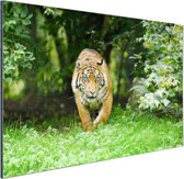 FotoCadeau.nl - Close-up van een Sumatraanse tijger Aluminium 180x120 cm - Foto print op Aluminium (metaal wanddecoratie)