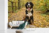 Fotobehang vinyl - Een Berner Sennenhond met mooie herfstbladeren breedte 450 cm x hoogte 300 cm - Foto print op behang (in 7 formaten beschikbaar)