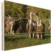 Aantal vale gieren op een grasveld Vurenhout met planken 90x60 cm - Foto print op Hout (Wanddecoratie)