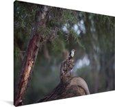 Prachtige grijskopijsvogel op een boomstronk Canvas 30x20 cm - klein - Foto print op Canvas schilderij (Wanddecoratie woonkamer / slaapkamer)