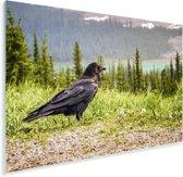 Raaf kijk uit over een landschap Plexiglas 90x60 cm - Foto print op Glas (Plexiglas wanddecoratie)