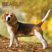 Beagle Kalender 2019