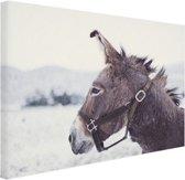 FotoCadeau.nl - Ezel in de sneeuw Canvas 30x20 cm - Foto print op Canvas schilderij (Wanddecoratie)
