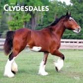 Clydesdales 2020 Square Wall Calendar