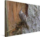 Taigaboomkruiper op de schors van een boomstam Canvas 180x120 cm - Foto print op Canvas schilderij (Wanddecoratie woonkamer / slaapkamer) XXL / Groot formaat!