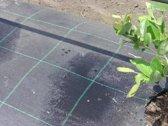 Gronddoek - worteldoek 1,75M breed x 20M lang; 35M²