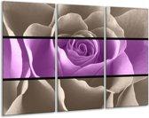 Glasschilderij Roos | Paars, Grijs | 120x80cm 3Luik | Foto print op Glas |  F004467