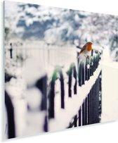 Roodborstje op een besneeuwd hek Plexiglas 50x50 cm - Foto print op Glas (Plexiglas wanddecoratie)