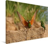 Blauwwangbijeneter spreidt zijn vleugels Canvas 30x20 cm - klein - Foto print op Canvas schilderij (Wanddecoratie woonkamer / slaapkamer)