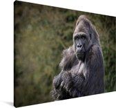 Grote Gorilla kijkt recht in de camera Canvas 60x40 cm - Foto print op Canvas schilderij (Wanddecoratie woonkamer / slaapkamer) / Wilde dieren Canvas Schilderijen
