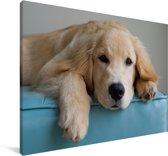 Een liggende Golden Retriever Canvas 30x20 cm - klein - Foto print op Canvas schilderij (Wanddecoratie woonkamer / slaapkamer) / Huisdieren Canvas Schilderijen