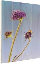 Lieveheersbeestje op bloem blauwe lucht Hout 20x30 cm - Foto print op Hout (Wanddecoratie)