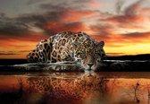 Fotobehang Leopard | PANORAMIC - 250cm x 104cm | 130g/m2 Vlies