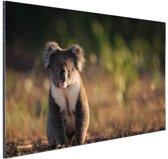 Koala op de grond zonsondergang Aluminium 90x60 cm - Foto print op Aluminium (metaal wanddecoratie)