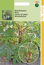 Hortitops Zaden - Ricinus Zanzibariensis Gemengd