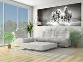 Black | White Photomural, wallcovering