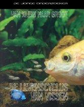 Van klein naar groot - De levenscyclus van vissen