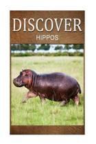 Hippos - Discover
