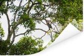 Bossen in het Nationaal park Manusela op het eiland Ceram Poster 120x80 cm - Foto print op Poster (wanddecoratie woonkamer / slaapkamer)