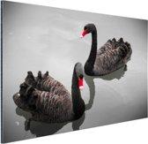 FotoCadeau.nl - Zwarte zwanen Aluminium 120x80 cm - Foto print op Aluminium (metaal wanddecoratie)