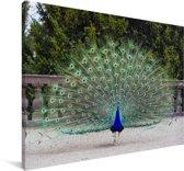 Mooie groene pauw laat verenvacht zien Canvas 140x90 cm - Foto print op Canvas schilderij (Wanddecoratie woonkamer / slaapkamer)