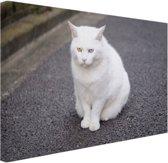 Witte kat zit midden op straat Canvas 60x40 cm - Foto print op Canvas schilderij (Wanddecoratie)