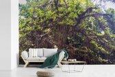 Fotobehang vinyl - Een kalebasboom of crescentia in een botanische tuin van Rio de Janeiro breedte 540 cm x hoogte 360 cm - Foto print op behang (in 7 formaten beschikbaar)