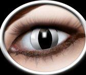 Halloween Party lenzen zwarte katten ogen
