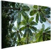 Bomen en bladeren in jungle Glas 90x60 cm - Foto print op Glas (Plexiglas wanddecoratie)