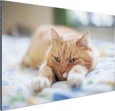 Kat ontspannen op bed Aluminium 30x20 cm - Foto print op Aluminium (metaal wanddecoratie)