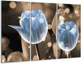 Glasschilderij Tulp | Blauw, Grijs | 120x80cm 3Luik | Foto print op Glas |  F005089